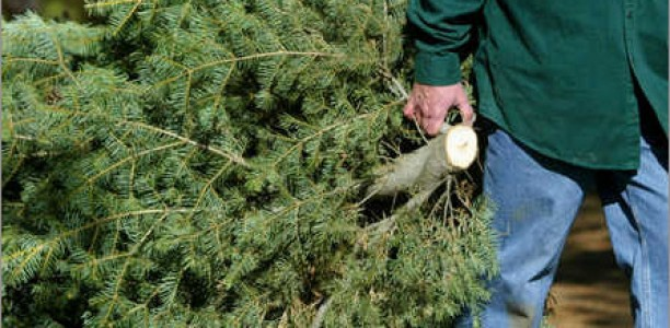 Saturday and Sunday, January 6-7: SES tree recycling
