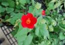 Garden Day is Sunday October 6
