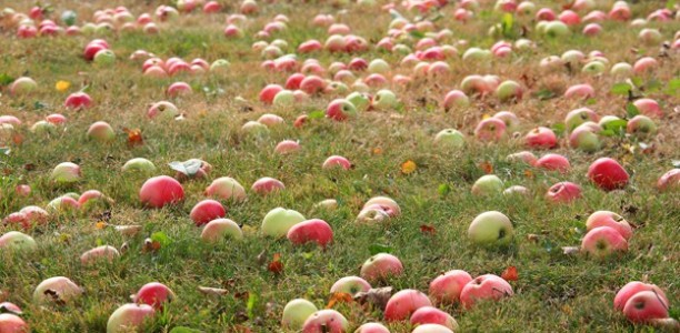 [Updated October 3] Calling all Harvest Fair helpers