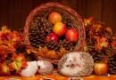 Wednesday-Friday, November 22-24: NO SCHOOL [Thanksgiving break]